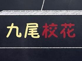 《九尾校花》的经典台词/语录